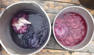 wool-dyeing-crop